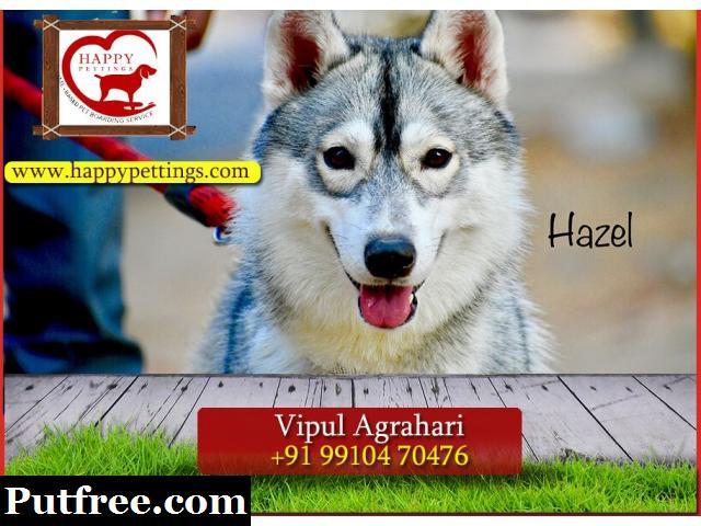 Pet Boarding Service Delhi   Pet Care Delhi - Happy Pettings