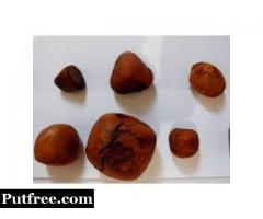 Universal supplies of COW / OX Gallstones-for-sale.