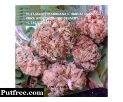 buy quality marijuana at street price