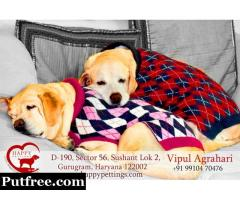 Best Pet Care And Dog Care By Happy Pettings