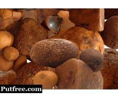 Buy Cow /Ox Gallstone & Cow Hair Ball Available On Stock Now @ (WhatsApp: +237673528224)