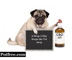 Treat pet problems with CBD pet tinctures