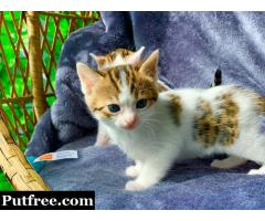 Beautiful Bengal Babies For Adoption
