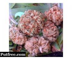 Buy top medical and recreation marijuana https://www.herbalsolutionus.com