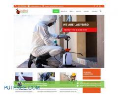 Professional Website Developer - Wordpress - eCommerce