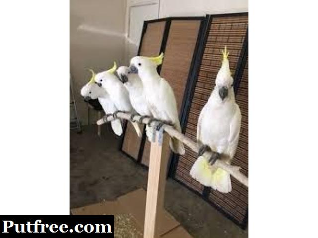 Parrots, cockatoos, Exotic birds and exotic animals for sale