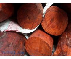 Red Sandalwood for sale