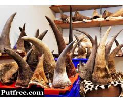 Rhino Horns Elephant Tusks and Red Mercury