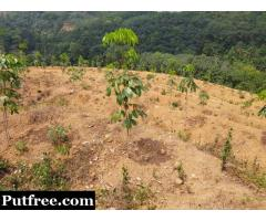 5.75 Acres of Rubber Plantation for Sale