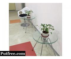 Indoor and Outdoor Plants on Rent Services in Gurgaon