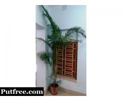 Plant Which Enhance the Beauty of Room & Also Decorate House