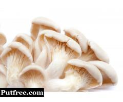 Mushroom Biology Internships at Kolhapur