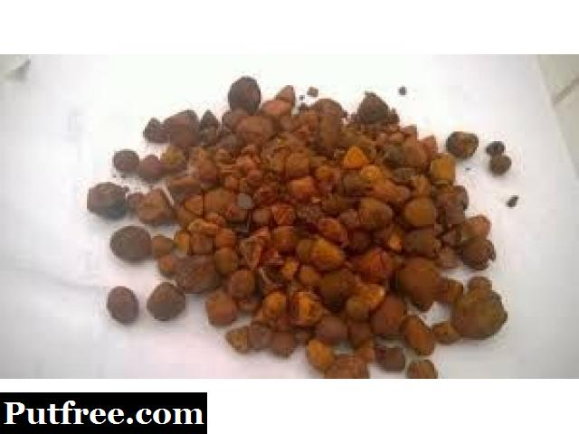 Buy Cow Gallstones, Ox Cow Gallstones, Cow Gallstones for sale