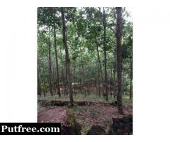 Rubber Plantation Farm for sale IN GHANA