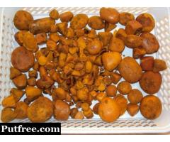Ox Cow gallstones are used for the pharmacopeia