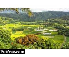 Financial Coach Kauai